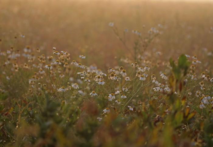 blommor i morgondis