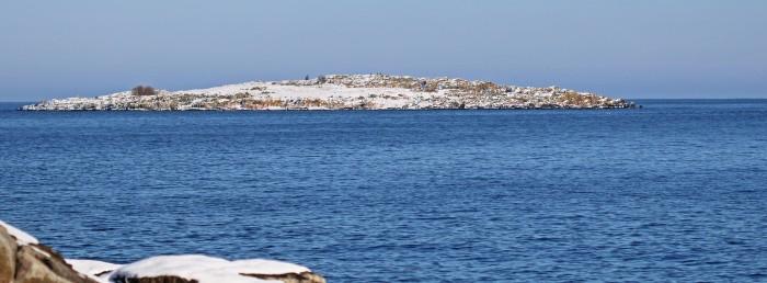 havsörn på avstånd