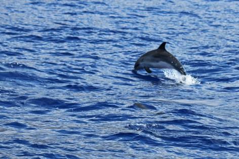 delfin 4