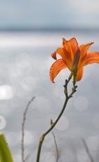 sommarens blommor 2