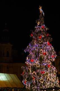 julgran-vid-marknade