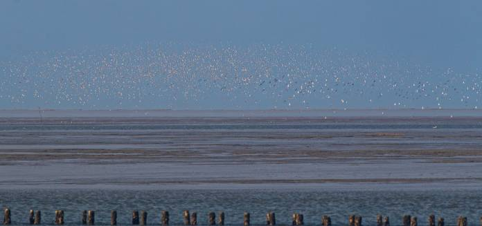 Vadehavet 1