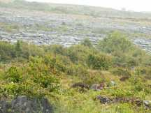 Burren 3