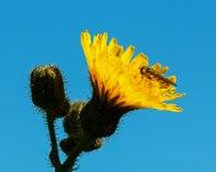 Hawkbit