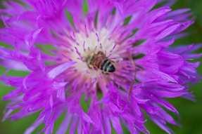 Unknown flower 2
