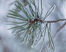 Vintermorgon 5