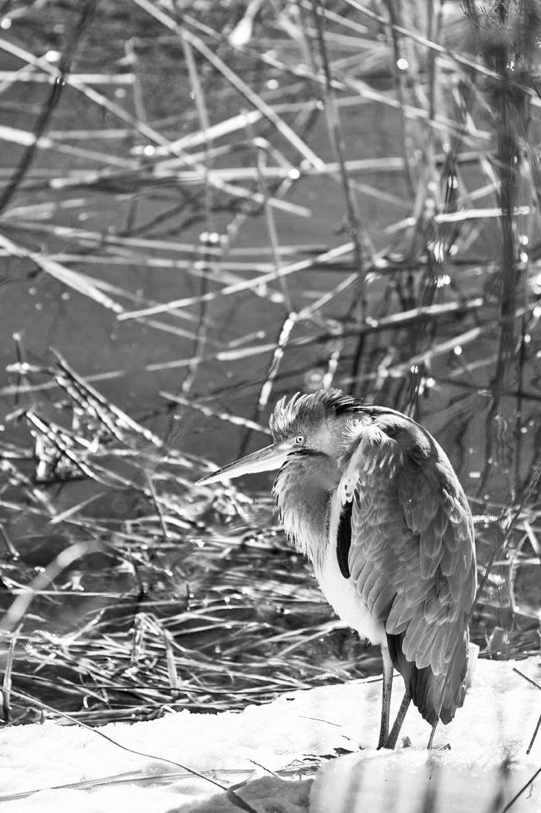 B&W Birds 1